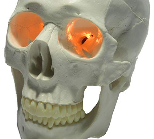 Four Eyes Halloween (24 inch, Battery Operated, Orange Led Eyes For Masks, Skulls and Halloween)