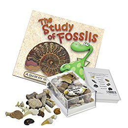 Fossil Box with Study of Fossils Booklet by Fossil Gift - Gift Fossil Box