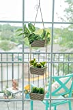 H4 3 Pot Ceramic Hanging Planter. Brighten up Your Home or Office. Perfectly Designed to Show Off Your Succulents, Cactus, Air Plants, or Even Create Your own Herb Garden.
