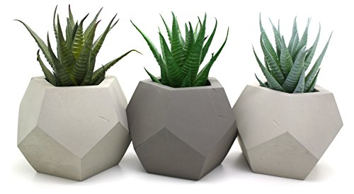 Six Canyons Faux Cactus Plants – Perfect Home Decor Cacti / Succulents (3 Plants Only)
