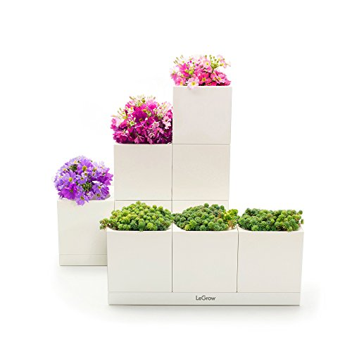 LeGrow Basic Indoor Hydroponic Herb Garden Kit with 6 Gardening Pots Greenhouse for Home Office ()