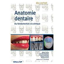 Anatomie dentaire: Du fondamental à la clinique