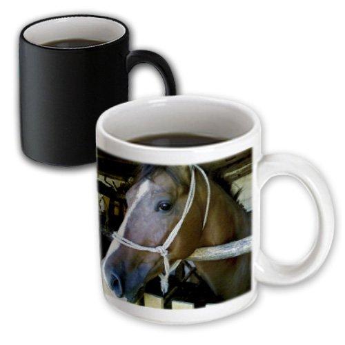 3dRose Portait of Arabian Horse Magic Transforming Mug, 11-Ounce by 3dRose