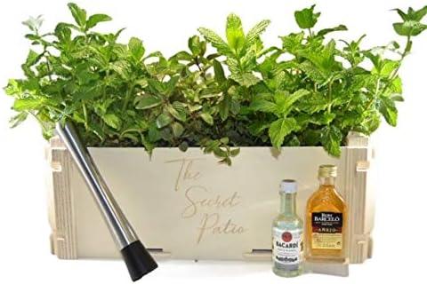 Pack MOJITOS Compuesto por 2 Plantas de hierbabuena y 1 de ...