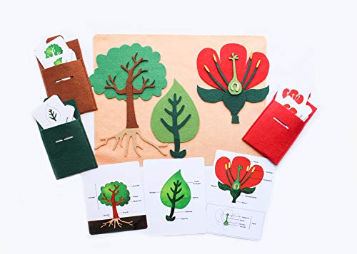 Montessori Botany Set, Parts of Trees, Leaves and Flowers, with