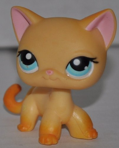 Amazon.com: Gato # 339 (naranja, ojos azules, óxido cola ...