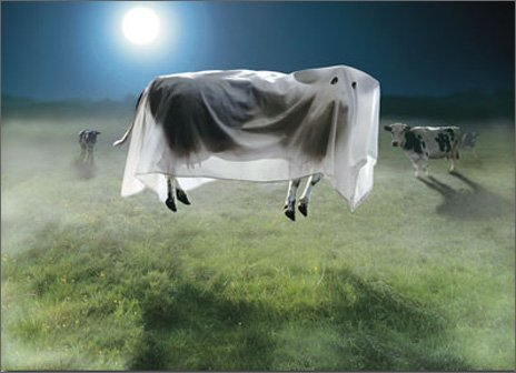 Ghost Cow Standout Stand Out Pop Up Halloween Card