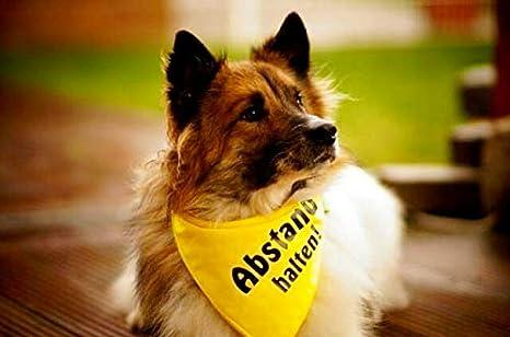 l/äufig Abstand Halten bissig oder in Ausbildung sind die nerv/ös /ängstlich Dimples Hundehalstuch Gelb Bitte Hund Nicht anfassen -Warn Halstuch f/ür kleine mittlere und Grosse Hunde