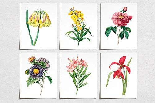 Amazon.com: Vintage Flower Rose Lily Prints (6) | Modern