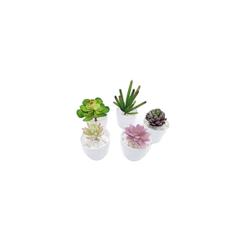 Fycooler-Decorative-Potted-Artificial-Succulent-Plants-Assorted-Potted-Faux-Succulent-Plants-Artificial-Aloe-Cactus-Potted-Topiary-with-White-Pots-for-Office-Wedding-Bedroom-Home-Decor-Set-of-5
