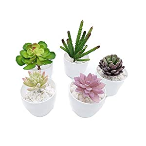 Fycooler Decorative Potted Artificial Succulent Plants Assorted Potted Faux Succulent Plants Artificial Aloe Cactus Potted Topiary with White Pots for Office Wedding Bedroom Home Decor (Set of 5) 34