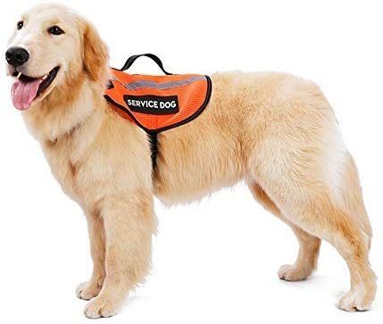 Arnés de chaleco para perro sin tirar, correa ajustable para el ...