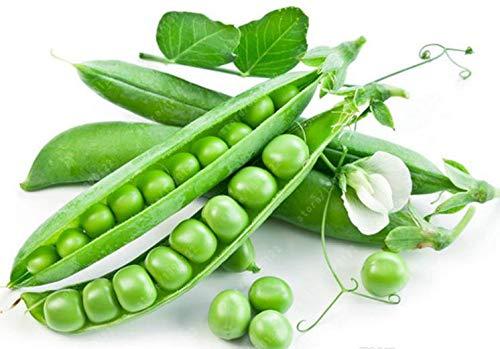 (Green Arrow Peas Heirloom Seeds - Non GMO -)