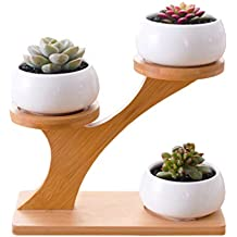 White Creative Succulent Plant Ceramic Treetop Bamboo Frame Potted Pot - Pack of 3