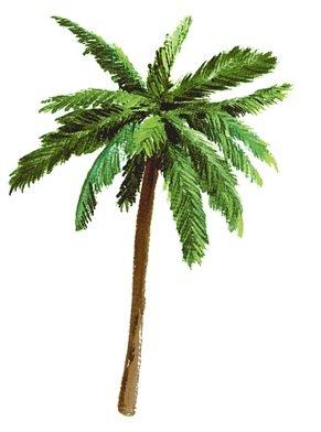 5-palm-tree-palms-tropical-island-beach-removable-peel-self-stick-adhesive-vinyl-decorative-wall-dec