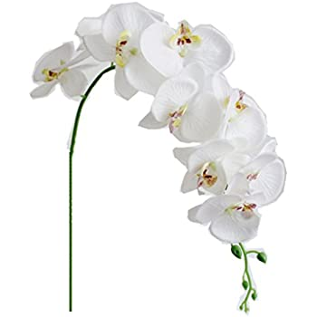 Lovely Amazon.com: 1 x Artificial Butterfly Orchid Flower Plant Home  VV53