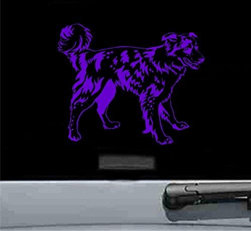 - JS Artworks Cute Border Collie Vinyl Decal Sticker Dog pet (Purple)