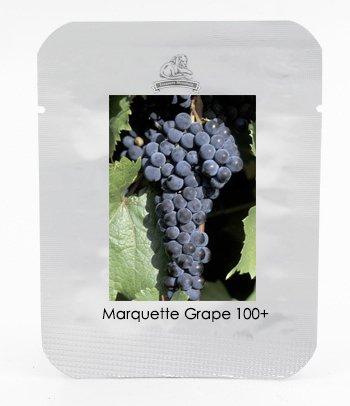 grape seedlings - 6