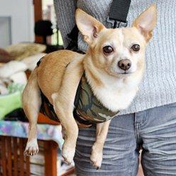 Amazon Com Sling2go Safe Carry Pet Sling Large Pet