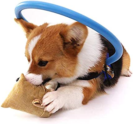 QML Collar de adiestramiento para Perros Seguro Arnés de halo ...