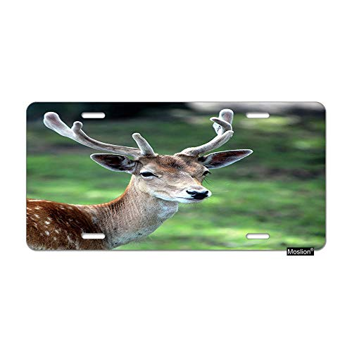 Moslion Deer License Plate Cute Animal Brown Deer with Horn Antler in Forest Tree Green Grass Car Tags Aluminum Metal Custom License Plate Cover 6x12 Inch for Truck SUV
