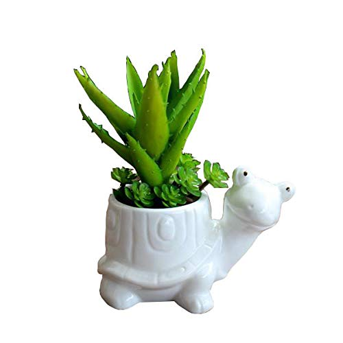 Cute Animal Tortoise Shaped Cartoon Ceramic Succulent Cactus Vase Flower Pot (Plant Not ()