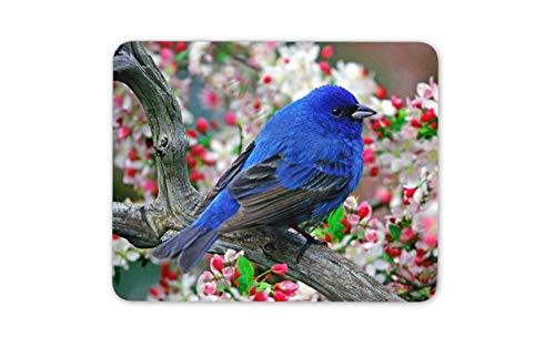 Indigo Bunting Bird Mouse Pad - Blue Small Birds Garden Mousepad Mouse Mat Gift Computer ()