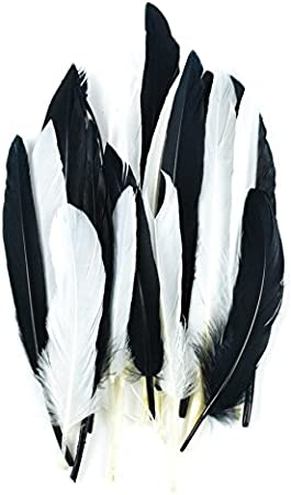 Gray//Ash Gray//Silver 3 Touch of Nature 38372 Mini Turkey 24 Piece Quill Feathers Mix