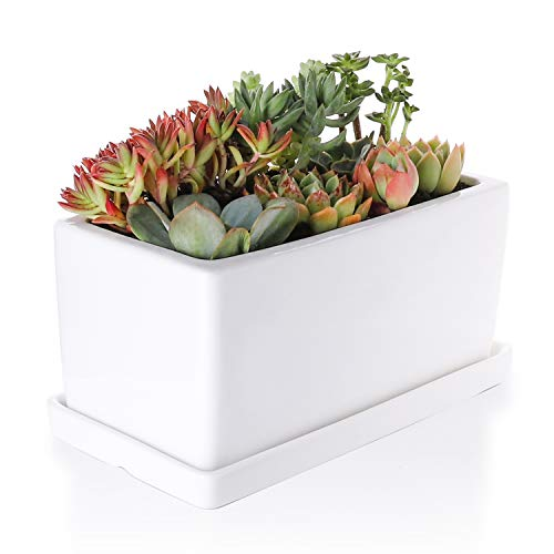 Greenaholics Succulent Plant Pot - 10Inch Rectangler Ceramic Planter with Saucer, Pots for Succulent, Little Cactus, White