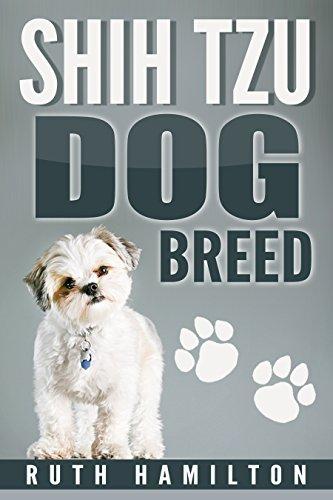shih-tzu-dog-breed-dog-breed-dog-training