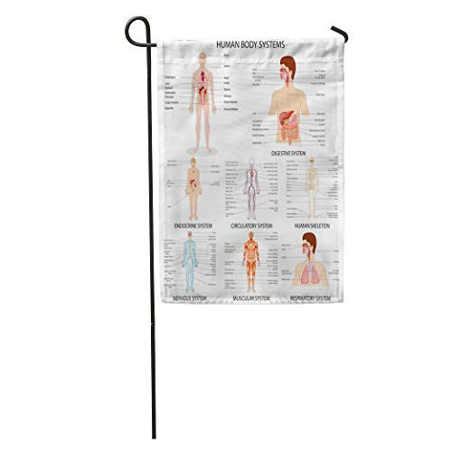 Semtomn Garden Flag Anatomy of Complete Chart Different Human Organ System Body Respiratory Home Yard House Decor Barnner Outdoor Stand 28x40 Inches Flag