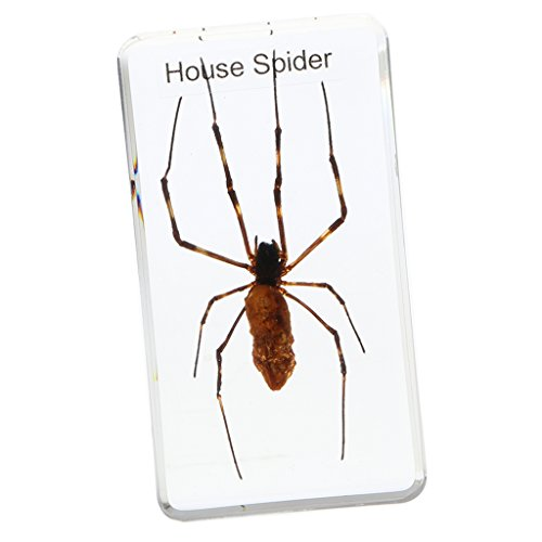 Baoblaze Real Insect Specimen Spider in Clear Paperweight - House Spider, 7.5 x 4 x 2 cm