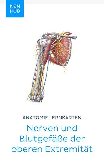 Anatomie Lernkarten: Nerven und Blutgefäße der oberen Extremität ...
