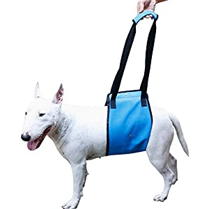 Dog Lift Support Harness Help Elderly Injured Disabled Arthritis ACL Pet Stand Up/Walk/Climb Stairs/Crawl into Car… Click on image for further info.