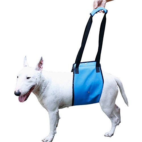 Dog Lift Support Harness Help Elderly Injured Disabled Arthritis ACL Pet Stand Up/Walk/Climb Stairs/Crawl into Car…