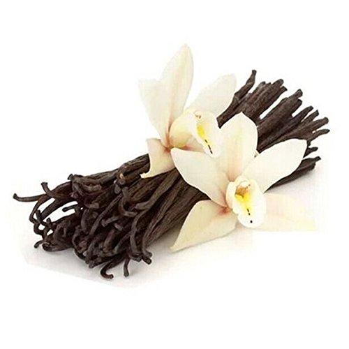 HealthyOrigin Madagascar Planifolia Gourmet Vanilla Beans Fresh & Prime Grade a for Vanilla Extract (Pack of 10)