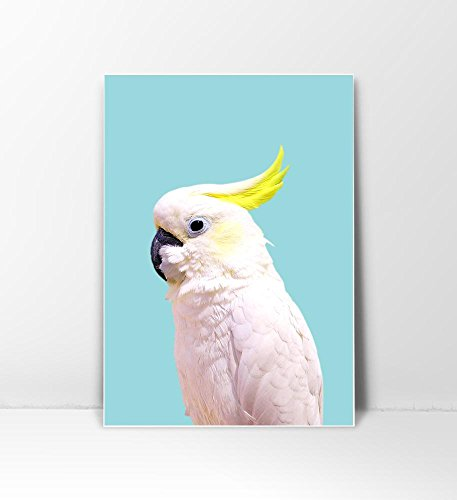 Boho Decor, Tropical Bird, Tropical Decor, Tropical Art, Bird Print, Parrot Print, Parrot Art, Bird Photography, Bohemian Art, Mint Wall Art, Cockatoo, Light Blue Art, Turquoise Art, 8x10