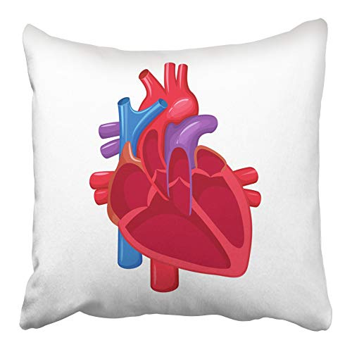 Compare price to heart blood flow diagram | TragerLaw.biz