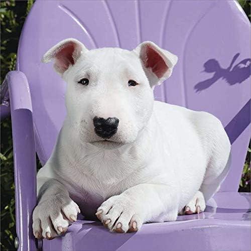 Amazon Com Bull Terrier Calendar 2021 Dog Breed Calendar Premium Wall Calendar 2020 2021 Office Products