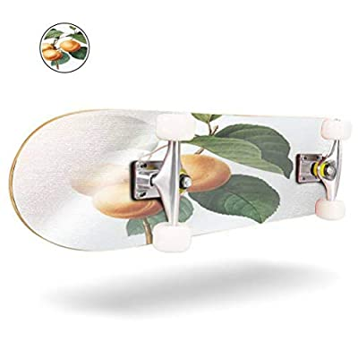 31 inch Skateboard apricot | redoute botanical illustrations victorian botanical stock Complete Longboard Standard Skate board Double Kick Tricks Skateboards for Kids Boys Girls Youths Beginners : Sports & Outdoors