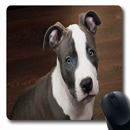 Mousepads Looking Blue Pit White Gray Color Pitbull Puppy Terrier Sitting Bull Nature Brown American Nose Non-Slip Gaming Mouse Pad Rubber Oblong Mat ()
