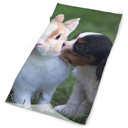 Head Rabbit Cylinder - Collie Puppy Rabbit Pets Headwrap Unisex Multifunction Headwear Polyester Quick Dry Soft Headband Neck Scarf,Premium Headdress Travel Magic Head Scarf Bandana Mask Neck Gaiter for Men Women