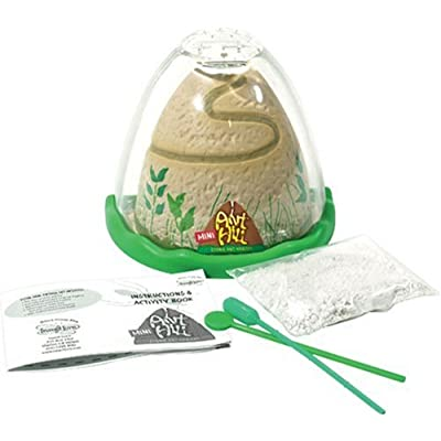 Insect Lore Ant Hill - Mini: Toys & Games