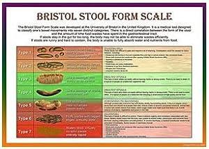 Bristol Stool Scale Laminated Health Chart A4 Amazon Co