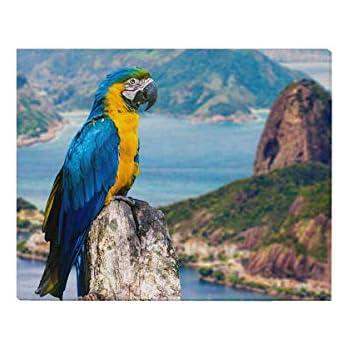 modern gift- wall art GLOSSY AFRICAN grey parrot bird art 4x6  GLOSSY