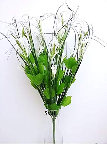 Bush Onion Grass - 22