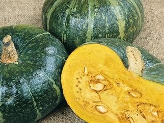 Todd's Seeds - Burgess Buttercup Winter Squash Seed - 7g Seed Packet