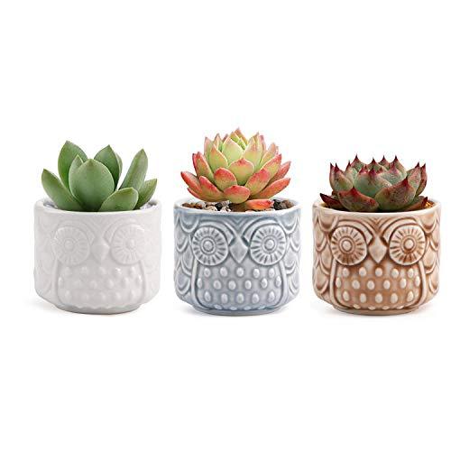 T4U Ceramic Succulent Planter Pot, Small Cactus Plant