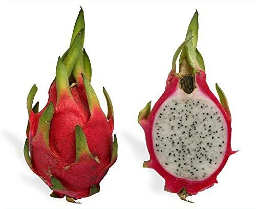 10 Plants Dragon Fruit Hylocereus undatus Vietnamese Jaina White #GHMN by Bright Sun (Image #1)