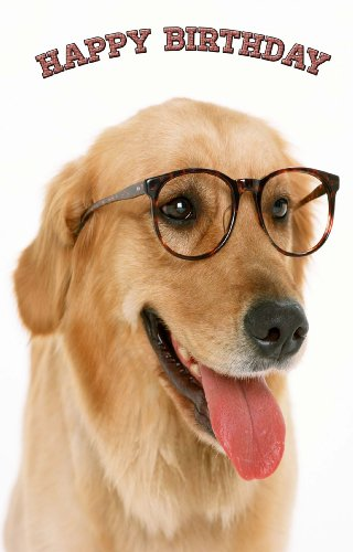 Golden Retriever Dog with Glasses Birthday Greeting Card 12 Pack